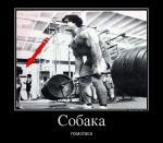 999453_sobaka_demotivators_ru.jpg
